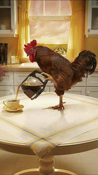 Обои на телефон утро, стол, птицы, облака, курица, кофе, американские, kitchen