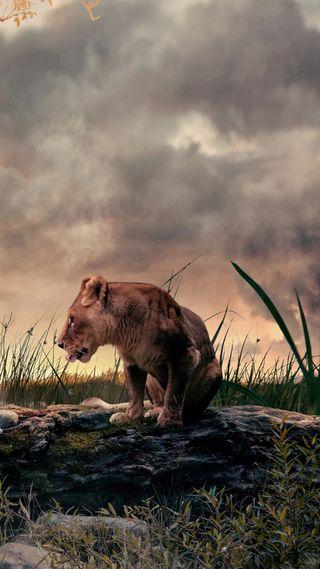 Обои на телефон облачно, лев, король, животные, дикие, wild animal, land
