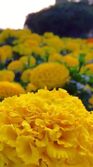 Обои на телефон сад, цветы, свежие, парк, красота, желтые