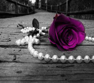 Обои на телефон флирт, фиолетовые, романтика, розы, природа, новый, любовь, крутые, жемчуг, love