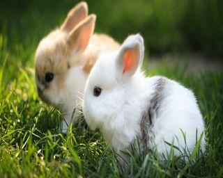 Обои на телефон cute rabbit, hd rabbits, love, любовь, милые, животные, навсегда, вместе, кролики