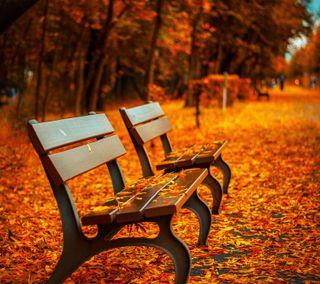 Обои на телефон осень, оранжевые, на улице, autumn 10