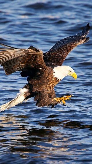 Обои на телефон флаги, черные, сша, птицы, орел, белые, америка, usa, prey