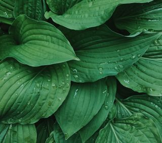 Обои на телефон яркие, мягкие, чистые, фото, роса, простые, природа, много, листья, капли, зеленые, вода, so much green, lush, hd