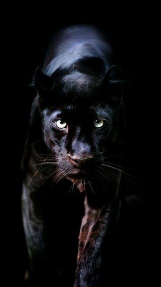 Обои на телефон пантера, черные, кошки