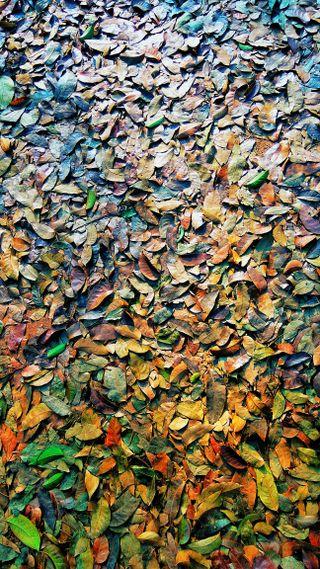 Обои на телефон фотографии, утро, упавший, сезон, природа, прекрасные, листья, зима, 2018