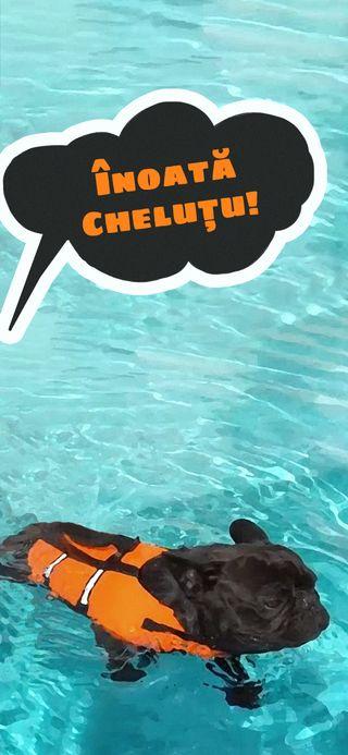 Обои на телефон собаки, плавание, swim, pool, inoata, dorian popa, chelutzu, chelutu, caine