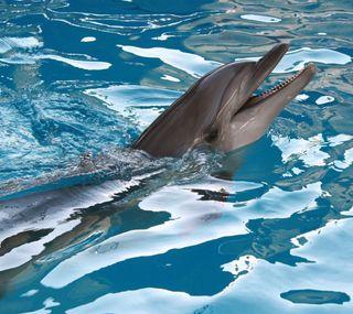 Обои на телефон животные, дельфины, вода, pool, hd