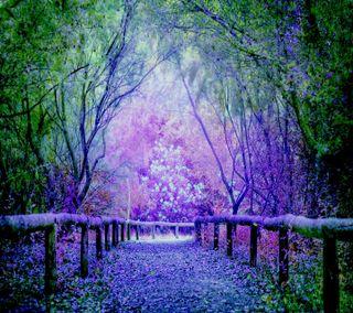 Обои на телефон лаванда, взгляд, lavender pathway, good