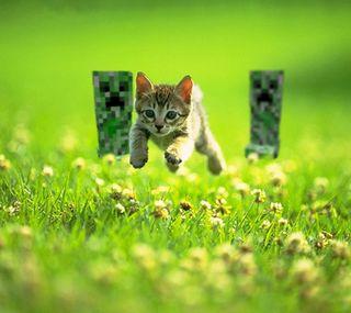 Обои на телефон питомцы, кошки, животные, бег, running cat