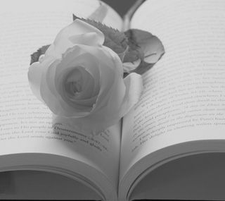 Обои на телефон книга, розы, белые