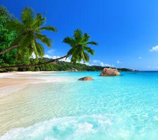 Обои на телефон тропические, пляж, синие, природа, пальмы, камни, вода