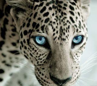 Обои на телефон леопард, hef, fsas