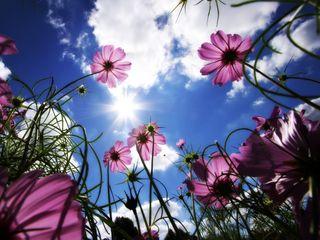 Обои на телефон солнце, цветы, цветные, солнечные, розовые, облака, небо, зеленые