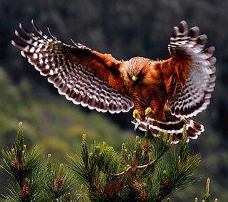 Обои на телефон летать, сова, птицы, приятные, перья, лес, животные, дикие, wild owl, ne