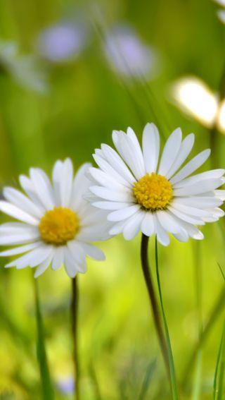 Обои на телефон трава, цветы, солнце, зеленые, желтые