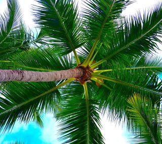 Обои на телефон природа, пальмы, деревья, великолепные, palms 2