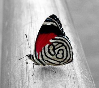 Обои на телефон естественные, приятные, природа, прекрасные, новый, животные, бабочки, hd, 3д, 3d