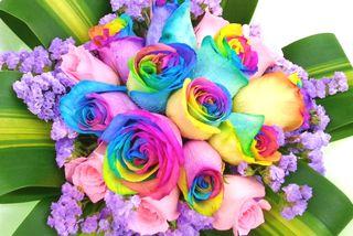 Обои на телефон весна, розы, coulorful roses