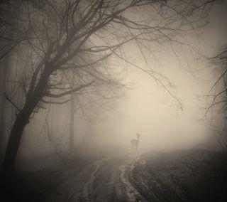 Обои на телефон олень, фон, туман, темные, путь, лес, деревья, path fog, deer forest, dark background trees