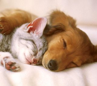 Обои на телефон щенки, сон, котята, любовь, puppy love