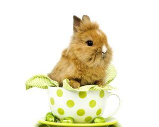Обои на телефон чашка, пасхальные, милые, кролики, кролик, cup