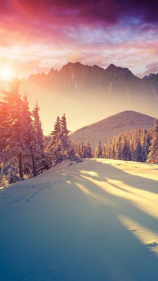 Обои на телефон природа, приятные, зима, классные, снег, солнце, красота, лес, ок