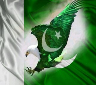 Обои на телефон орел, счастливые, пакистан, независимость, день, flage nd eagle, flage