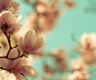 Обои на телефон макро, цветы, природа, небо, magnolia