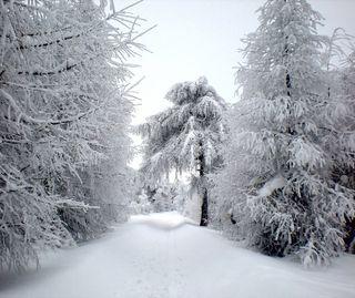 Обои на телефон тишина, снег, snow and silence, 014, 01