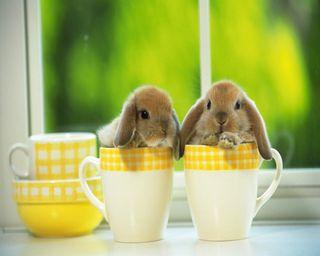 Обои на телефон чай, чашка, утро, милые, кролики, кролик, кофе, hd, cute bunny, cup
