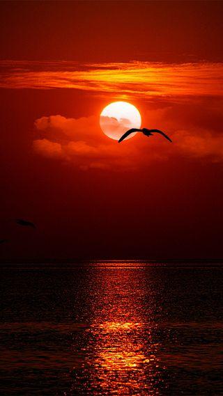 Обои на телефон облака, море, красые, вечер, seagull