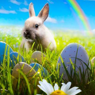 Обои на телефон яйца, поле, пасхальные, трава, радуга, празднование, кролик, зеленые