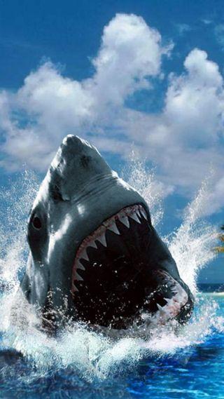 Обои на телефон акула, thrj, hth