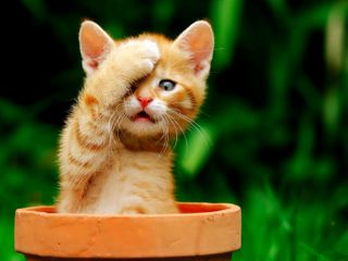 Обои на телефон котята, милые, красые, кошки, коты, забавные, животные, red cat