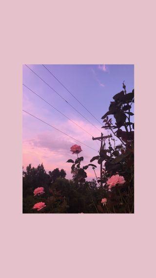 Обои на телефон эстетические, цветы, супер, zsoek, aesthetic flower, aesthethic