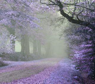 Обои на телефон мечты, фиолетовые, тропа, сирень, симпатичные, лаванда, живописные, дорога, деревья, lavender dreams