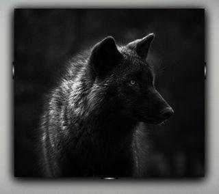 Обои на телефон хищник, темные, волк, апекс