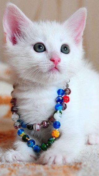 Обои на телефон симпатичные, кошки, коты, pretty cats