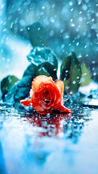 Обои на телефон макро, цветы, синие, розы, природа, прекрасные, надежда, капли, дождь, rose in rain