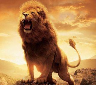 Обои на телефон чувства, лев, милые, любовь, король, the lion, love
