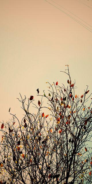 Обои на телефон экран, тьма, туман, растения, природа, листья, деревья, вороны, ворон, блеклые, trees wallpepars
