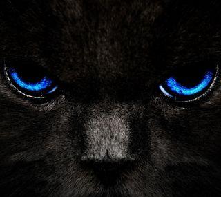 Обои на телефон великий, черные, синие, приятные, питомцы, крутые, кошки, животные, дизайн, глаза