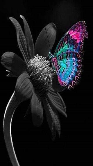Обои на телефон бабочки, цветы, butterfly and flower, and flower