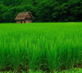 Обои на телефон трава, природа, поле, зеленые
