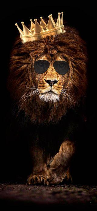 Обои на телефон лев, корона, король, джунгли, royal, hd, fearless
