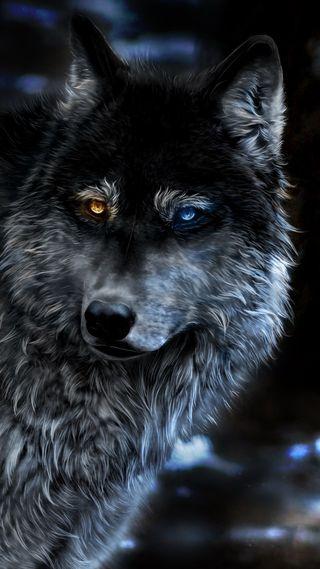 Обои на телефон дикие, черные, лицо, животные, глаза, волк, a wolf