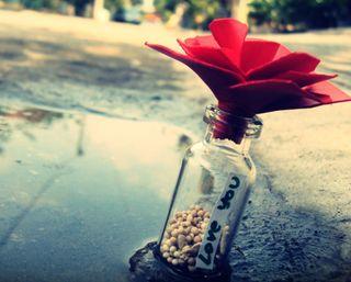 Обои на телефон note, love ya, любовь, цветы, пляж, текст, бутылка