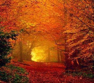 Обои на телефон сияние, природа, осень, листья