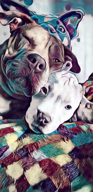 Обои на телефон щенки, собаки, питбуль, пит, bully, americanbully, 2 pitbull